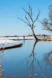 η αλιεία του πάγου βρίσκεται ακριβώς παγιδευμένος χειμώνας zander Στοκ εικόνες με δικαίωμα ελεύθερης χρήσης