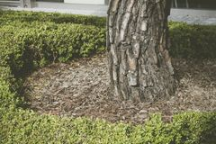 Η βάση ενός δέντρου στη χλόη στοκ εικόνα
