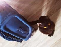 Η βαλίτσα του ιδιοκτήτη που συλλέγεται στις διακοπές και τη γάτα είναι δυσαρεστημένη Στοκ εικόνα με δικαίωμα ελεύθερης χρήσης