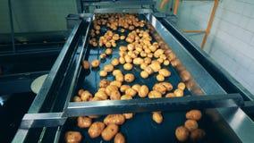 Η βιομηχανική μηχανή επανεντοπίζει τις πατάτες πιρογών απόθεμα βίντεο