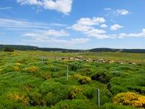 Η βοσκή αγελάδων και δένει, Cevennes, Γαλλία Στοκ εικόνες με δικαίωμα ελεύθερης χρήσης