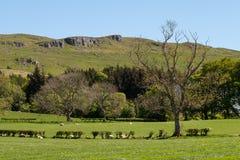 Η βουνοπλαγιά βράχων Cauld επάνω από την πόλη Largs στη Σκωτία στοκ εικόνες