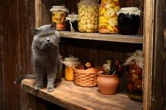 Η βρετανική γάτα κάθεται στον πίνακα στο υπόβαθρο του εκλεκτής ποιότητας ραφιού με τις τράπεζες Στοκ Φωτογραφίες