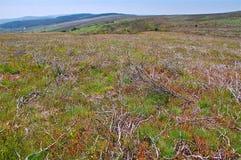 Η βλάστηση σε Dartmoor δένει Στοκ Εικόνα