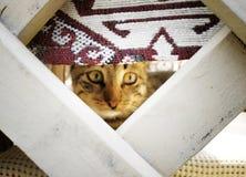Η γάτα έκρυψε και κοιτάζει έξω στοκ φωτογραφίες με δικαίωμα ελεύθερης χρήσης
