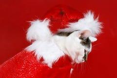 Η γάτα έντυσε ως Άγιος Βασίλης Στοκ φωτογραφία με δικαίωμα ελεύθερης χρήσης