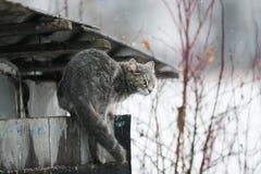Η γάτα αναρριχείται στις σιταποθήκες και τις στέγες κατά τη διάρκεια χιονοπτώσεων στοκ φωτογραφία