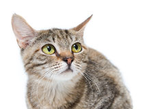 Η γάτα από το καταφύγιο ρωτά την προσοχή, τη βοήθεια, τα τρόφιμα και την προστασία Στοκ Εικόνες