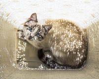 Η γάτα βάζει σε ένα γαλακτοκομικό καλάθι πλυντηρίων και ανάβει από τις μικρές ηλιαχτίδες Στοκ φωτογραφίες με δικαίωμα ελεύθερης χρήσης