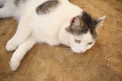 Η γάτα βάζει στην εύθυμη χαλάρωση άμμου καλά - όντας Στοκ Φωτογραφίες