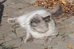 Η γάτα βάζει στο πεζοδρόμιο το φθινόπωρο Στοκ φωτογραφία με δικαίωμα ελεύθερης χρήσης