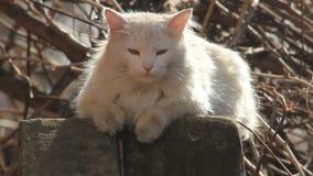 Η γάτα βρέθηκε στα sunrays απόθεμα βίντεο