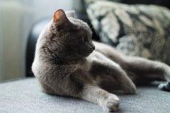Η γάτα βρίσκεται σε έναν καναπέ Στοκ εικόνες με δικαίωμα ελεύθερης χρήσης