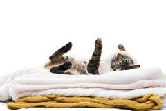 Η γάτα βρίσκεται στα μάλλινα ενδύματα Στοκ Εικόνες