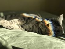 Η γάτα βρίσκεται στο κρεβάτι και ένα ουράνιο τόξο απεικονίζεται σε το Μια φωτογραφία στοκ εικόνα με δικαίωμα ελεύθερης χρήσης