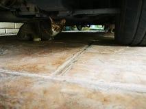 Η γάτα είναι κάτω από το αυτοκίνητο στο γκαράζ, χαλαρώνει και ηρεμεί κάτω το κατοικίδιο ζώο Στοκ Φωτογραφίες