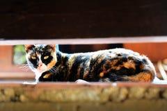 Η γάτα είναι κοίταγμα Στοκ φωτογραφία με δικαίωμα ελεύθερης χρήσης