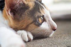 Η γάτα είναι κρυφοκοιτάζει Στοκ Φωτογραφίες