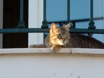 Η γάτα εξερευνά το τοπίο στοκ φωτογραφία