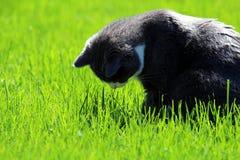 Η γάτα εξετάζει το έδαφος στη χλόη στοκ εικόνα