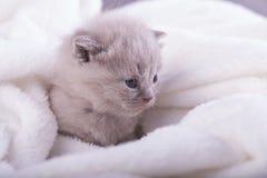 Η γάτα θέτει για τις φωτογραφίες Στοκ Φωτογραφίες