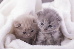 Η γάτα θέτει για τις φωτογραφίες Στοκ Εικόνες
