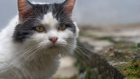 Η γάτα θέτει Στοκ Εικόνα