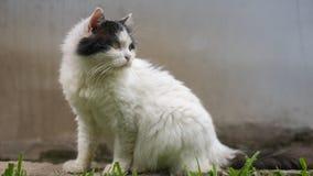 Η γάτα θέτει Στοκ φωτογραφία με δικαίωμα ελεύθερης χρήσης