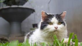 Η γάτα θέτει Στοκ εικόνες με δικαίωμα ελεύθερης χρήσης