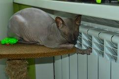 Η γάτα θερμαίνεται κοντά στην πηγή θερμότητας στοκ φωτογραφίες με δικαίωμα ελεύθερης χρήσης