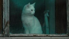 Η γάτα κάθεται από το παράθυρο απόθεμα βίντεο