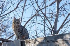 Η γάτα κάθεται και κοιτάζοντας Στοκ Φωτογραφίες