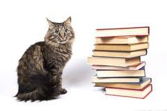 Η γάτα κάθεται κοντά σε έναν σωρό των βιβλίων Στοκ εικόνα με δικαίωμα ελεύθερης χρήσης