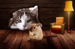 Η γάτα κάθεται μπροστά από την τρύπα ποντικιών και παρατηρεί το ποντίκι στοκ εικόνα