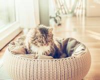 Η γάτα κάθεται σε ένα καλάθι πέρα από το υπόβαθρο καθιστικών στοκ εικόνες