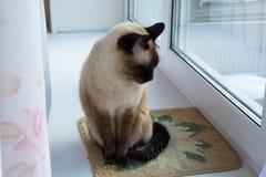 Η γάτα κάθεται σε ένα windowsill Στοκ φωτογραφία με δικαίωμα ελεύθερης χρήσης