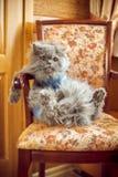 Η γάτα κάθεται στην προεδρία Στοκ φωτογραφίες με δικαίωμα ελεύθερης χρήσης