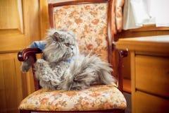 Η γάτα κάθεται στην προεδρία Στοκ Φωτογραφία