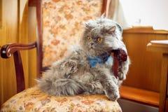 Η γάτα κάθεται στην προεδρία στοκ εικόνες με δικαίωμα ελεύθερης χρήσης