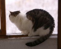 Η γάτα κάθεται στη balkony στενή επάνω φωτογραφία παραθύρων κοιτάζοντας έξω Στοκ Φωτογραφία