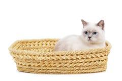 Η γάτα κάθεται στο καλάθι στοκ φωτογραφία με δικαίωμα ελεύθερης χρήσης