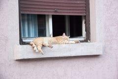 Η γάτα καθορίζει σε ένα παράθυρο Στοκ Φωτογραφία