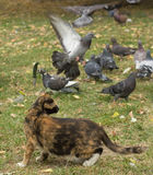 Η γάτα και τα περιστέρια Στοκ φωτογραφία με δικαίωμα ελεύθερης χρήσης