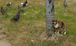 Η γάτα και τα περιστέρια Στοκ Φωτογραφίες