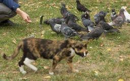 Η γάτα και τα περιστέρια στοκ φωτογραφίες με δικαίωμα ελεύθερης χρήσης