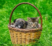 Η γάτα και το σκυλί είναι φίλοι Στοκ φωτογραφία με δικαίωμα ελεύθερης χρήσης