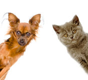 Η γάτα και το σκυλί κοιτάζουν έξω η ανασκόπηση απομόνωσε το λευκό Στοκ φωτογραφία με δικαίωμα ελεύθερης χρήσης
