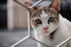 Η γάτα κοίταξε επίμονα με την υποψία και το κοίταγμα μέσω του φράκτη σπιτιών, εκλεκτική εστίαση στοκ φωτογραφία με δικαίωμα ελεύθερης χρήσης