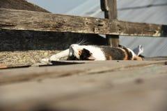 Η γάτα κοιμάται σε έναν ξύλινο τοίχο Στοκ Εικόνες