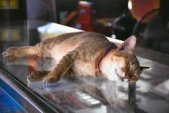 Η γάτα κοιμάται την άποψη κινηματογραφήσεων σε πρώτο πλάνο στοκ εικόνες με δικαίωμα ελεύθερης χρήσης